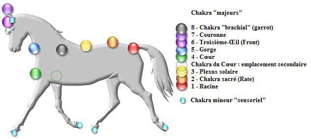 chakra cheval